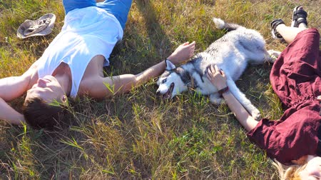 Dolly shot of happy pair lying on green grass at field and caress their siberian husky dog at sunny day. Young couple in love relaxing and enjoying summer weekend at sunset. Top view Close up