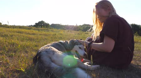 Dolly shot of beautiful girl sitting on green grass at field and stroking her siberian husky dog on sunset. Young woman with blonde hair spending time together with her pet at meadow. Close up Stock mozgókép