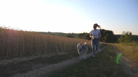 pulling up : Close up of siberian husky dog pulling the leash during jogging along road near wheat field at sunset. Happy woman in sunglasses running with her pet along road near golden meadow. Slow motion