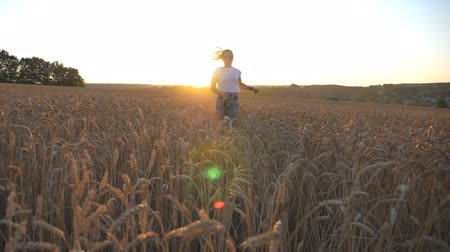 stonky : Young girl in sunglasses running with her dog through ripe spikelets at meadow. Cute siberian husky pulling the leash during jogging on wheat field at sunset. Sunlight at background. Slow motion