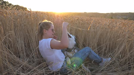 stonky : Happy woman with blonde hair holding in hand golden spikelet and playing with her siberian husky at wheat meadow. Young girl in sunglasses sitting with her pet at field on sunset. Slow motion Dostupné videozáznamy