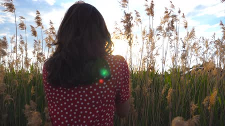 Young unrecognizable girl walking through field of high grass at sunset time. Girl enjoying nature with beautiful landscape at background. Back view Slow motion Close up Стоковые видеозаписи