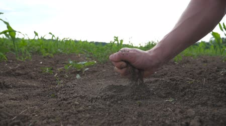 Male farmer hands holds a handful of soil and pouring it back through his fingers on the field. Young man examining dry soil on the meadow with sprouts of sunflower. Side view Slow motion Close up