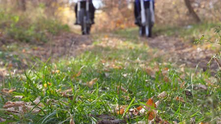 wooden path : Two motorcyclists riding on trail in autumn forest. Motorcycles driving on wood path over autumnal colorful fallen leaves. Bikers train in nature. Active rest outdoor. Blurred background. Slow motion