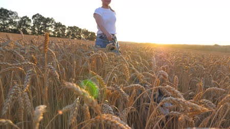 guinzaglio : Close up of young girl in sunglasses going with her dog across spikelets at meadow. Cute siberian husky pulling the leash during walking on golden wheat field at sunset. Sunlight at background