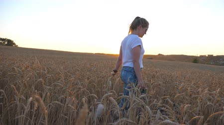 stonky : Profile of young girl holding golden wheat stalks in hand and walking with her siberian husky on leash across meadow. Caucasian woman spending time with her dog at cereal field on sunset. Close up