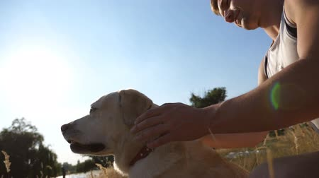 bağlılık : Man sitting on meadow and stroking his dog. Labrador or gold retriever sitting on green grass with his owner. Sun rays in background. Close up Slow motion Stok Video