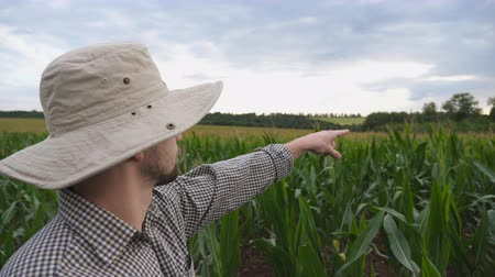 stonky : Close up of male farmer standing in corn field and pointing with his hand on large plantation. Young serious worker in hat looking on green meadow at overcast day. Concept of agricultural business Dostupné videozáznamy