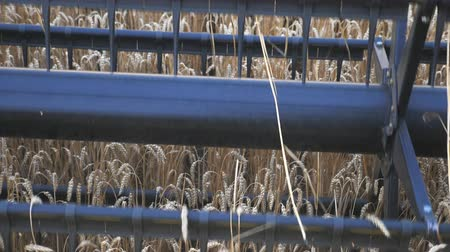 monokultur : Detail view on knife of combine spinning and cutting ears of wheat. Harvester working in field gathering crop of ripe barley. Concept of harvesting or agronomy. Slow motion Close up