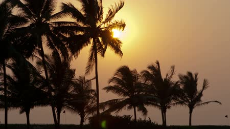 Beautiful sunset sun setting behind palm trees , Timelapse