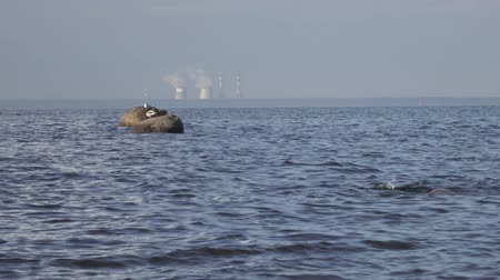 Seagulls sit on coastal stones against the background of pipes of thermal power plant. Gulf of Finland. St. Petersburg Stock mozgókép