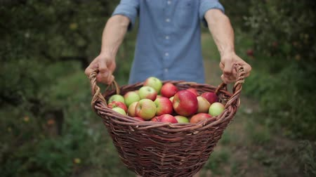 pomar : Young man with a basket full of apples Vídeos