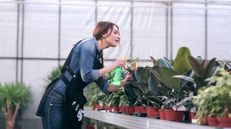 florista : Female florist spraying flowers in greenhouse Stock Footage