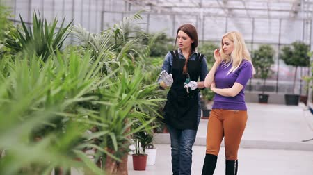 kötény : Florist conducts a tour of greenhouse Stock mozgókép