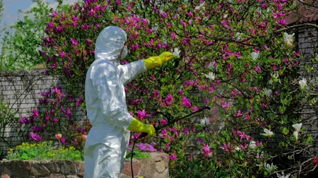 pulverização : Man fertilizing the blossom tree Stock Footage