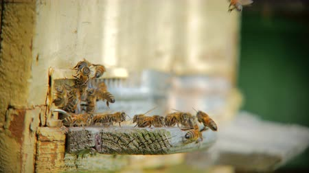 apiary : Bee flying in front of a beehive