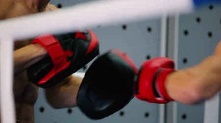yarışma : Close-up of boxing gloves hit the paws.