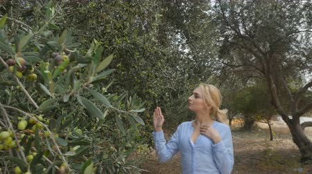 feltörés : A woman walks on a plantation among olive trees