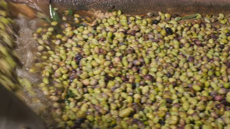 olivový olej : Olives are washed in the production of oil