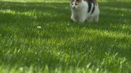 outside view : Cute cat walks on the green grass