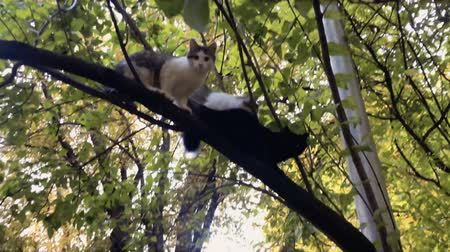 climbed : Homeless cats on tree Stock Footage