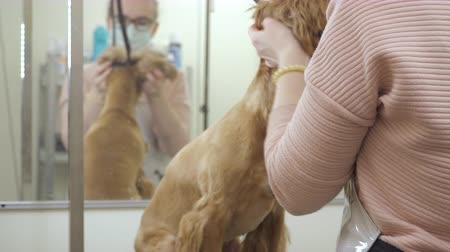 işlenmiş : Groomer takes off the lead from dog after procedures in zoo salon