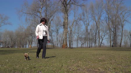 köpekler : Mature woman walks in park with her little dog