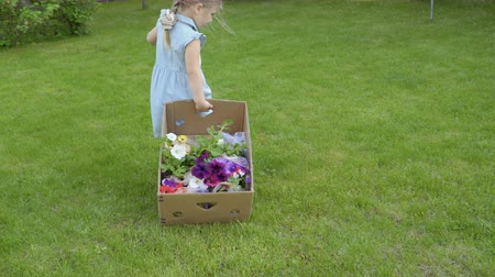 helpful : Cute little girl pull cardbox with flowers on the grass