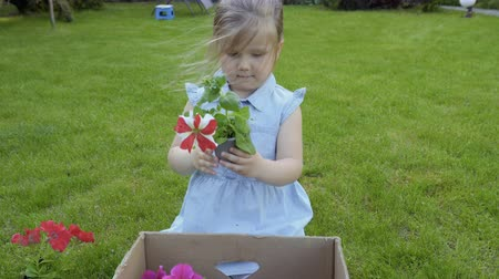 seedlings : Adorable child take out flowers from cardbox