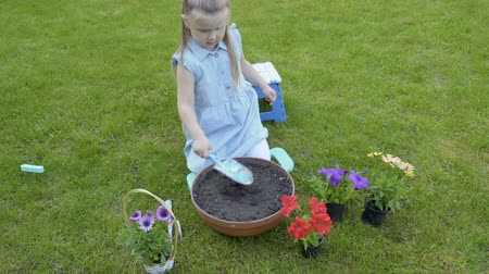 helpful : Little girl dig hole into pot with soil for replant petunia