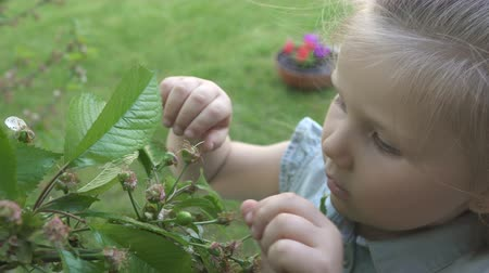 unripe : Cute little girl explore cherry tree with green berries Stock Footage