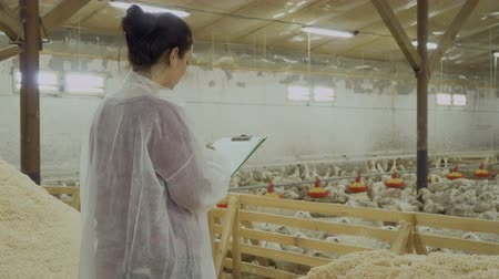 corral : Inspection of paddocks with ducks at poultry farm Stock Footage