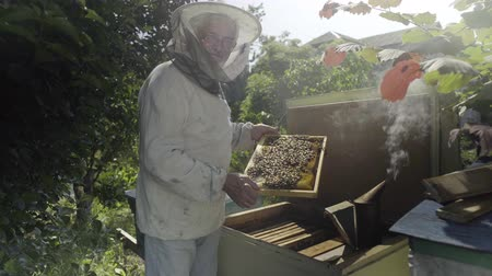 apiary : Beekeeper holding honeycombs and standing near open bee hive in the garden