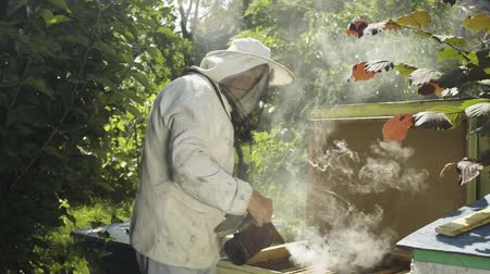 worker bees : Beekeeper in protective uniform fumigate hive with bee smoker in slow motion