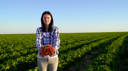 plantação : Young pretty girl hold box full of strawberries standing at green plantation