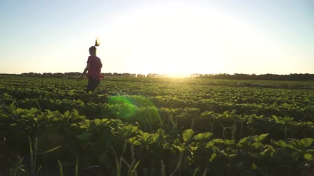 agribusiness : Happy young girl running at sunset at strawberry field in slow motion