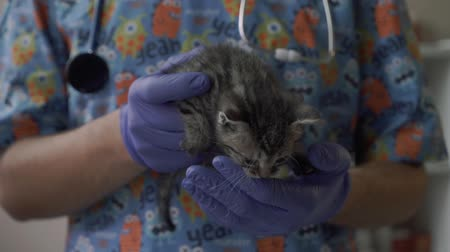 kot i pies : Veterinarian hold a small kitten in his arms Wideo
