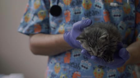 kot i pies : Vet hold a small kitten in his arms