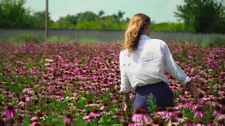 temperada : Beautiful girl is walking along a flower field