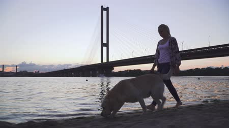 žehlení : Beautiful girl walks with a dog along the river Dostupné videozáznamy