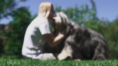 trusting : Woman caress her dog sitting on grass Stock Footage