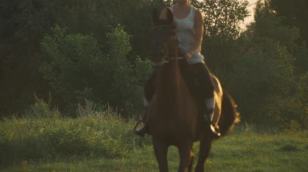 stallion : Girl is riding a horse