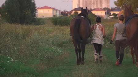 верхом : Two girls are driving two horses on a field road