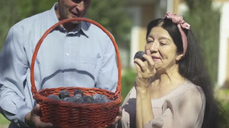 appelboom : Adult couple with a basket of plums in the garden Stockvideo