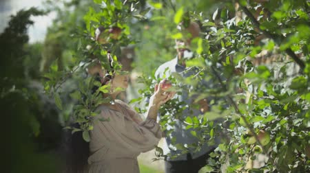 apple park : Adult couple picking apples in the garden