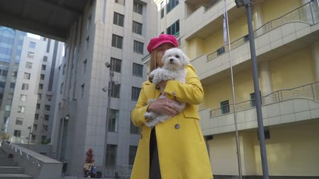 esfregar : Sweet blond lady rubs face on the dog at the city