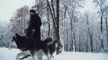 сибирский : Beautiful couple walking together with two cute siberian fluffy huskies in the winter snowy forest