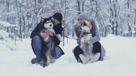 сибирский : Attractive young couple holds and hugs two beautiful siberian huskies and scratches their fluffy bellies. Dogs on a winter walk in the forest.