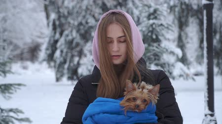 yorkie : Portrait pretty young girl with long hair covered with a hood holding a yorkshire terrier wrapped in a blue blanket on hands in a winter snow-covered park. A teenager and a dog on a walk outdoors. Stock Footage