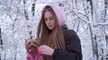 yorkie : Portrait pretty young girl with long hair covered with a hood holding a yorkshire terrier dressed in wool sweater on hands in a winter snow-covered park. Teenager and a dog on a walk outdoors. Stock Footage